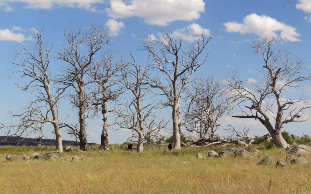 INVITATION TO PARTICIPATE IN THE RECENT ECOLOGICAL CHANGE IN AUSTRALIA PROJECT