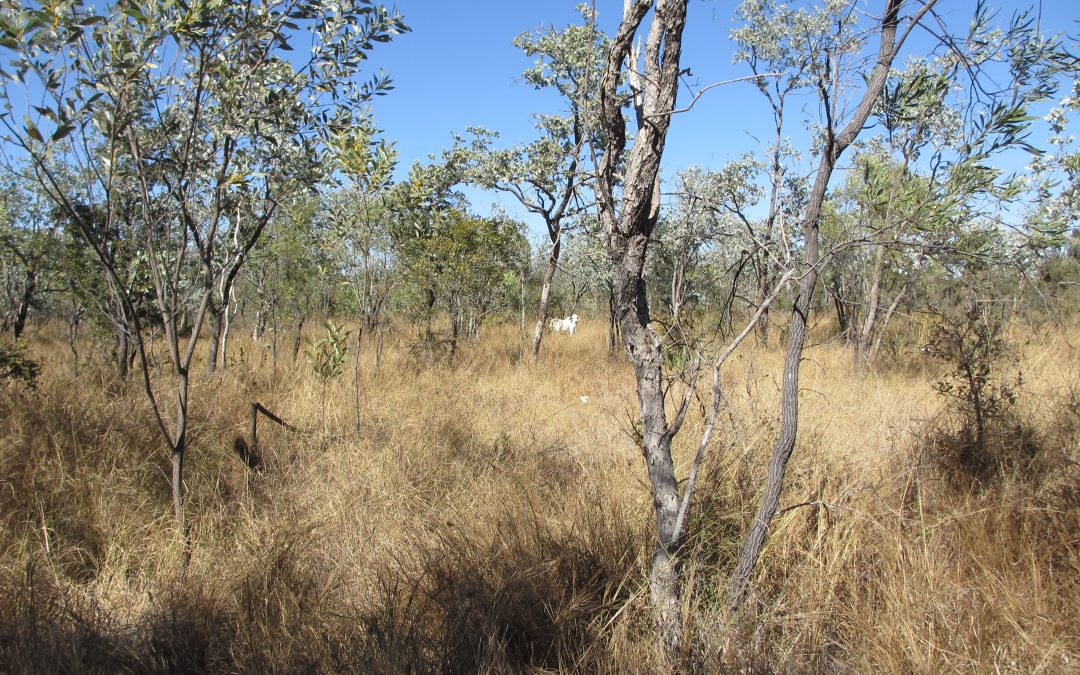 WOODY COVER CHANGE AT KIDMAN SPRINGS SINCE 1988