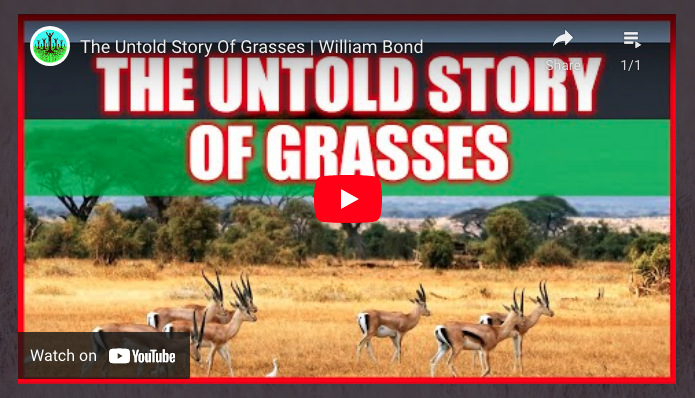 DO GRASSLANDS HAVE A ROLE IN FIGHTING CLIMATE CHANGE?
